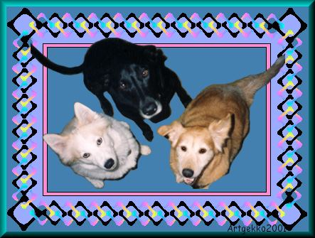 Artgekko's dogs - Tessie, Chrissy, and Nugget